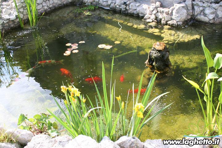 Sito per gli appassionati di laghetti pesci for Costruire laghetto in cemento