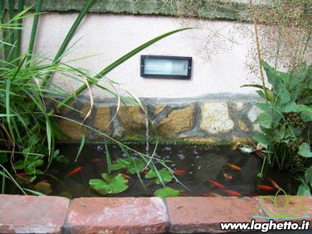 Sito per gli appassionati di laghetti pesci for Vasca laghetto rettangolare