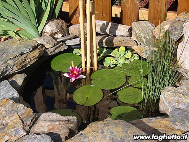 Sito per gli appassionati di laghetti pesci for Piante ossigenanti per laghetto