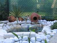 I laghetti del veneto sito per gli for Vendita pesci per laghetto