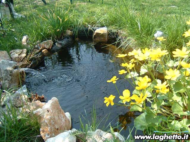 Sito per gli appassionati di laghetti pesci for Vasca pesci giardino