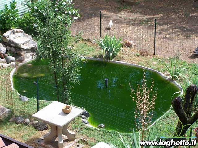 Sito per gli appassionati di laghetti pesci for Filtro acquario fai da te
